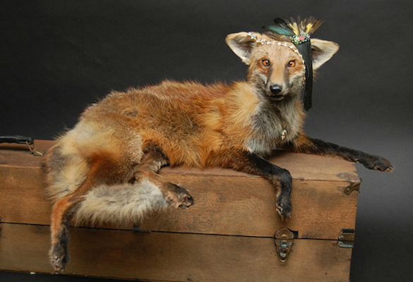 hipster-taxidermy