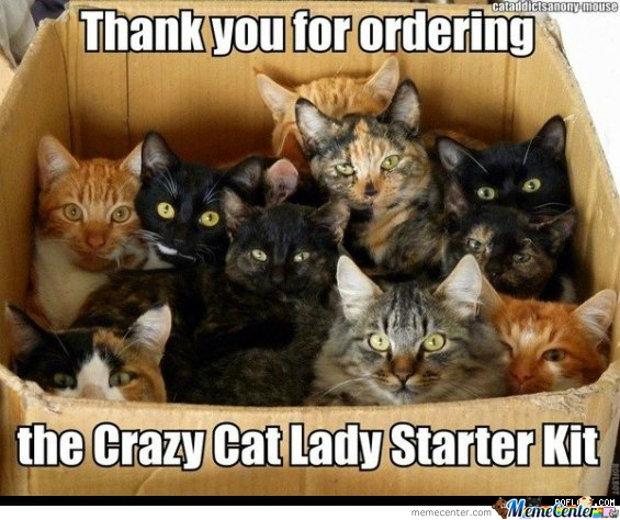 crazy-cat-lady_o_359258